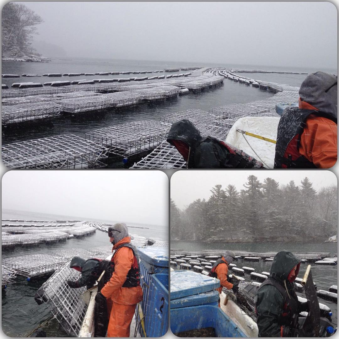 crews turning oyster cages on the water in snow