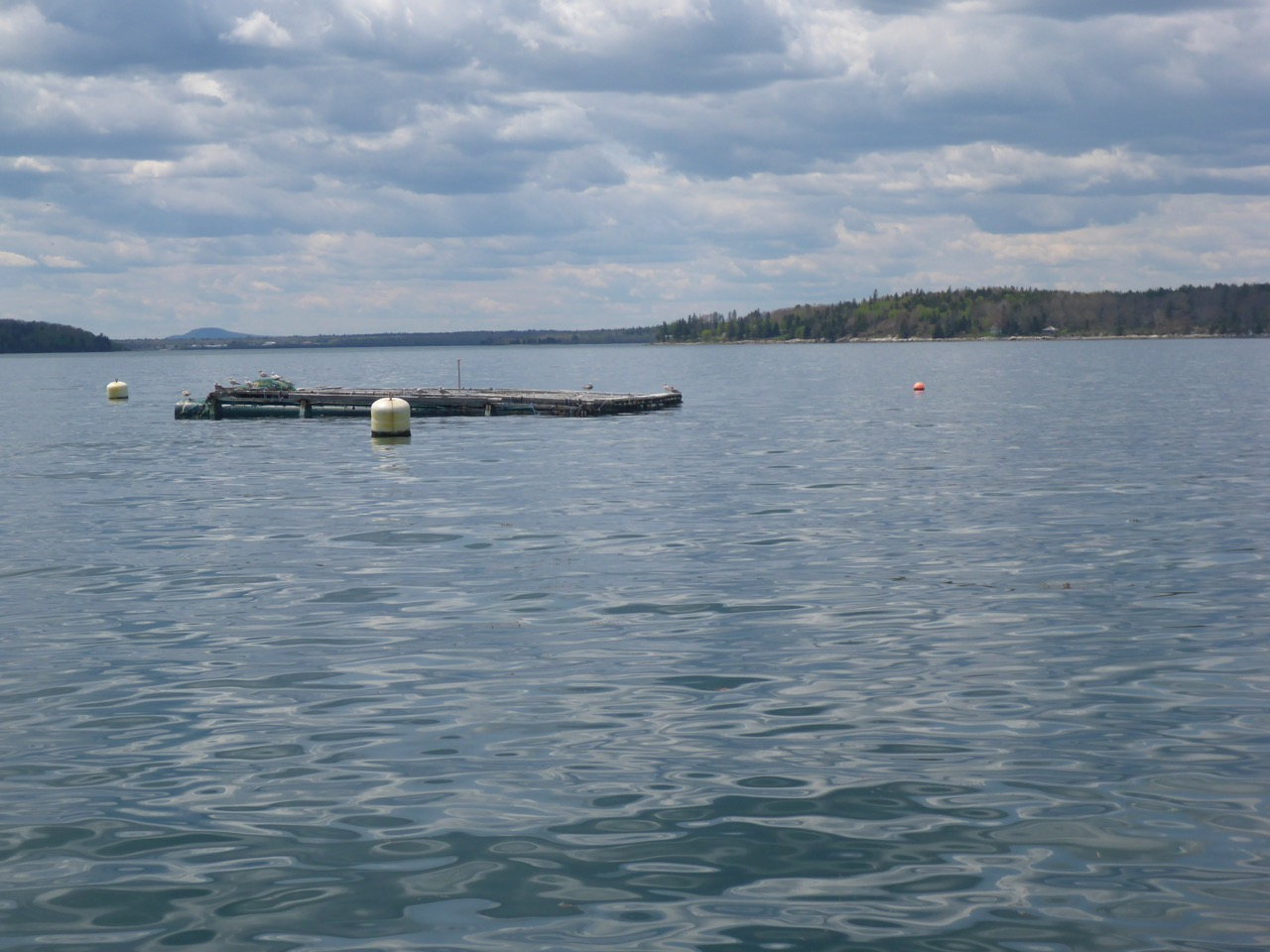 on the water view of a mussel raft in a bay with land in the background