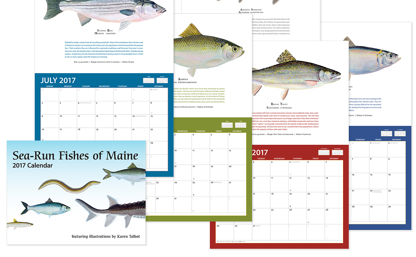 cover and pages of fish calendar