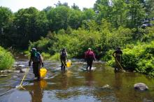 Four people spread out across a stream channel with fish sampling equipment